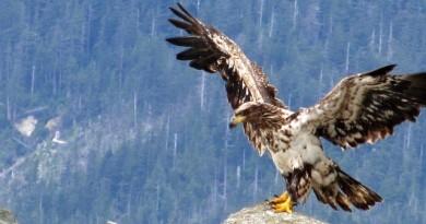 Águila con la crisis de los 40